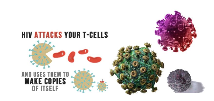 HIV attacks your t-cells